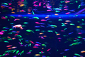 Lots of small neon fish in the aquarium - PhotoDune Item for Sale