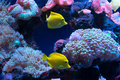 Bright fish swim in the aquarium - PhotoDune Item for Sale