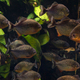 Group of piranhas floating in an aquarium - PhotoDune Item for Sale