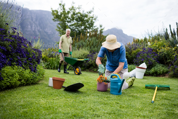 Senior woman planting flower while senior man standing with wheelbarrow in background - Stock Photo - Images