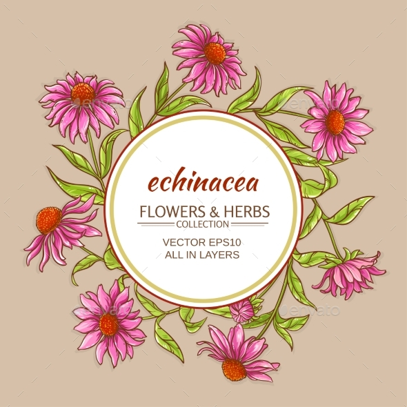 Echinacea Vector Frame - Flowers & Plants Nature