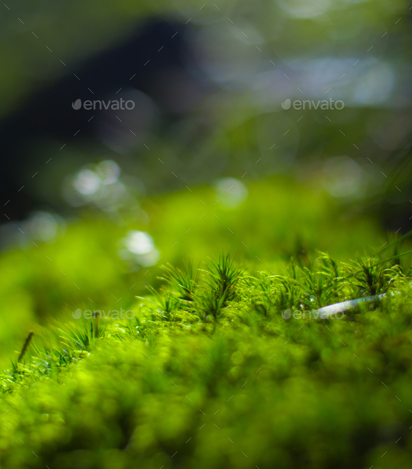 moss detail - Stock Photo - Images