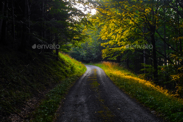 dirt road through a forest during sunset - Stock Photo - Images