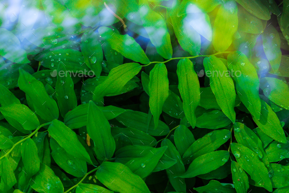 fresh green leaves pattern - Stock Photo - Images
