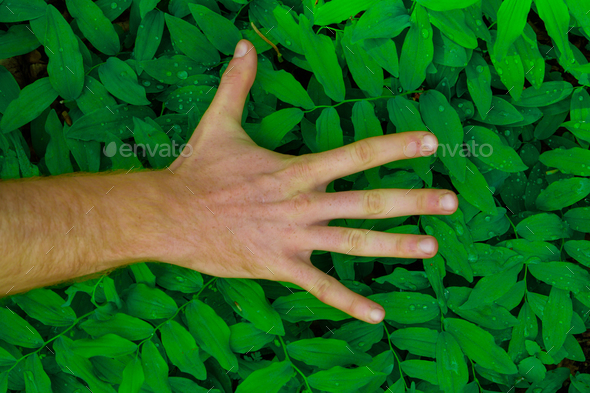 fresh green leaves pattern with hand showing different signs in the foreground - Stock Photo - Images