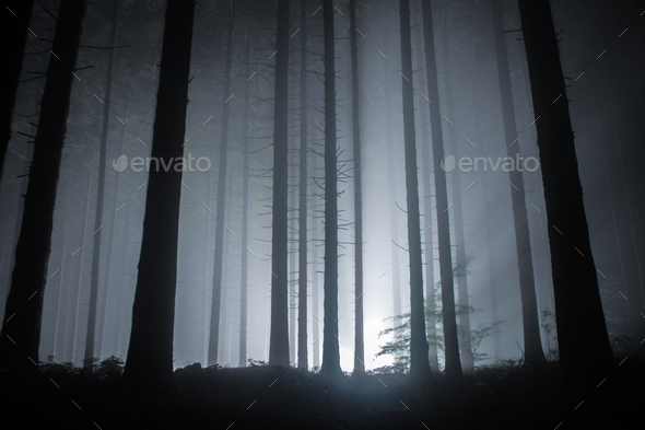 fog in a forest at night with mysterious light in the distance - Stock Photo - Images