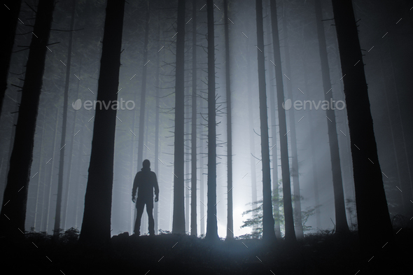 fog in a forest at night with mysterious silhouette and light in the distance - Stock Photo - Images