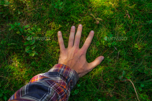 male hand touching a soft green ground moss - Stock Photo - Images