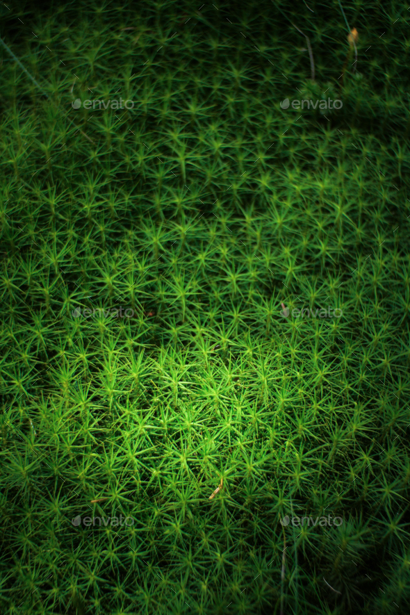 detail of a fresh green moss plant - Stock Photo - Images