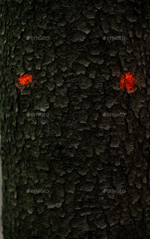 detail of a scary face on a trunk of a tree - Stock Photo - Images