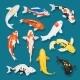 Japanese Fish Vector Illustration Carp