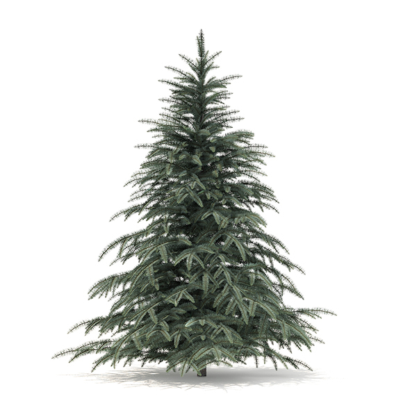 Spruce Tree 3D Model 2.3m - 3DOcean Item for Sale
