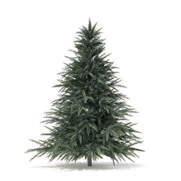Spruce Tree 3D Model 1.6m - 3DOcean Item for Sale