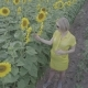 Aerial View of a Young Pregnant Woman Walking through the Field with Blooming Sunflowers - VideoHive Item for Sale