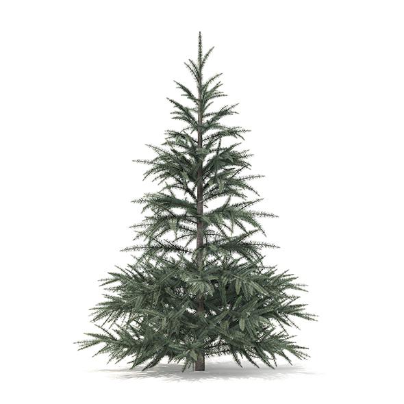 Spruce Tree 3D Model 1.5m - 3DOcean Item for Sale