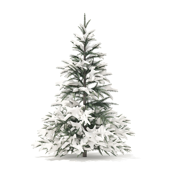 Spruce Tree with Snow 3D Model 1.5m - 3DOcean Item for Sale
