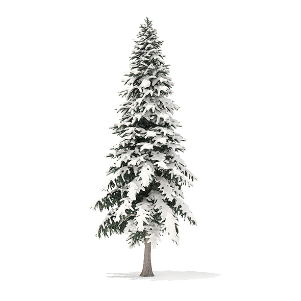 Spruce Tree with Snow 3D Model 6.4m - 3DOcean Item for Sale