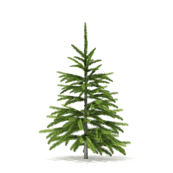 Fir Tree 3D Model 0.8m - 3DOcean Item for Sale