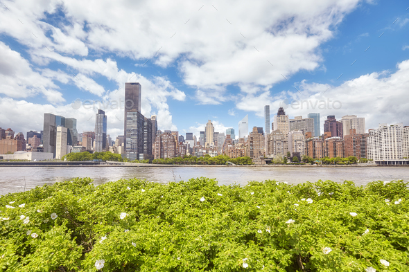 New York City skyline seen from the Roosevelt Island, USA - Stock Photo - Images