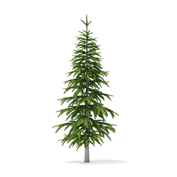 Fir Tree 3D Model 2.6m - 3DOcean Item for Sale