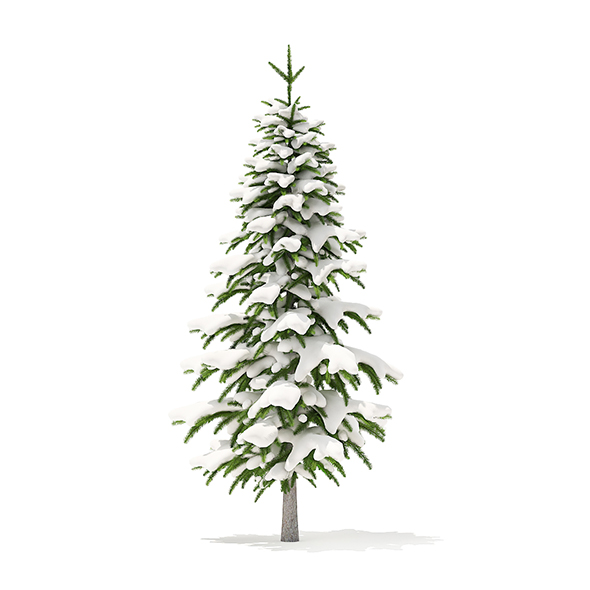 Fir Tree with Snow 3D Model 2.6m - 3DOcean Item for Sale