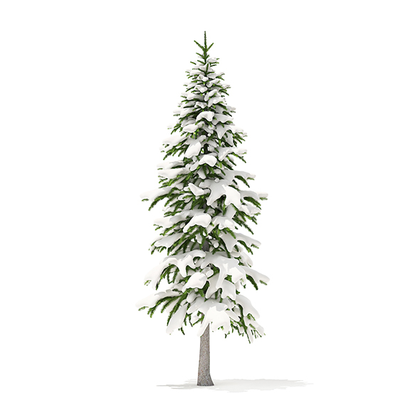 Fir Tree with Snow 3D Model 3.4m - 3DOcean Item for Sale