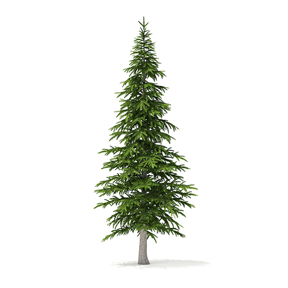 Fir Tree 3D Model 4.5m - 3DOcean Item for Sale