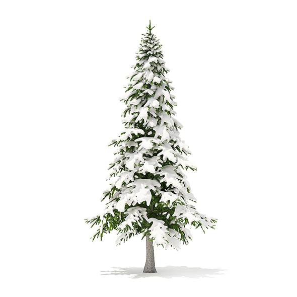 Fir Tree with Snow 3D Model 5.9m - 3DOcean Item for Sale