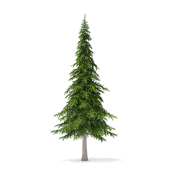 Fir Tree 3D Model 7m - 3DOcean Item for Sale