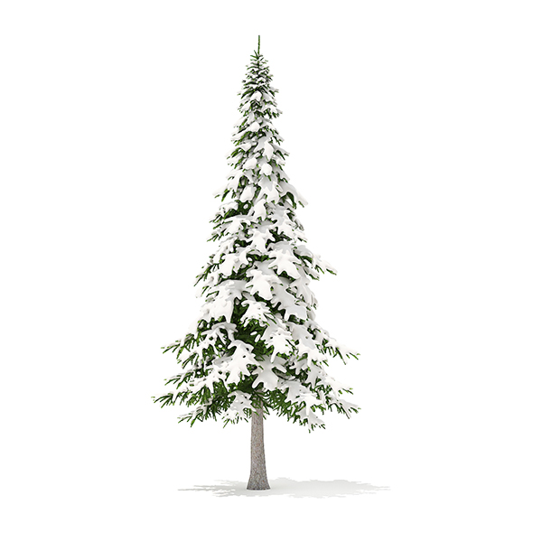 Fir Tree with Snow 3D Model 7m - 3DOcean Item for Sale
