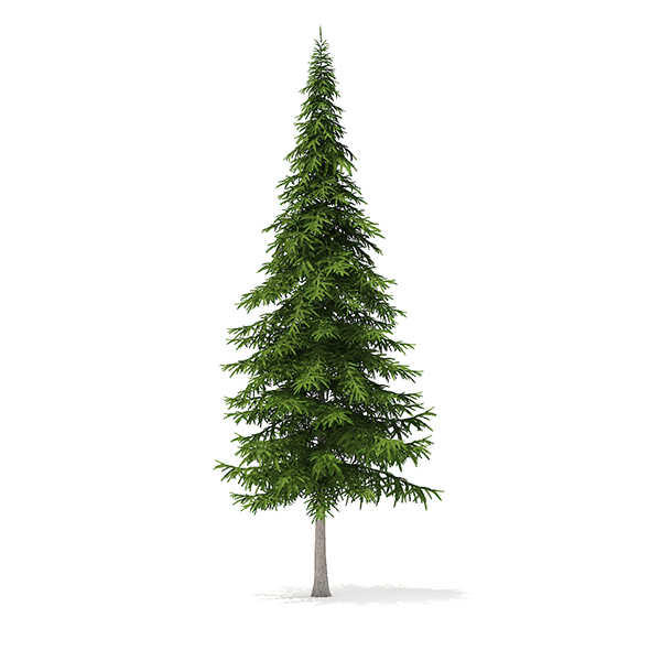 Fir Tree 3D Model 10m - 3DOcean Item for Sale