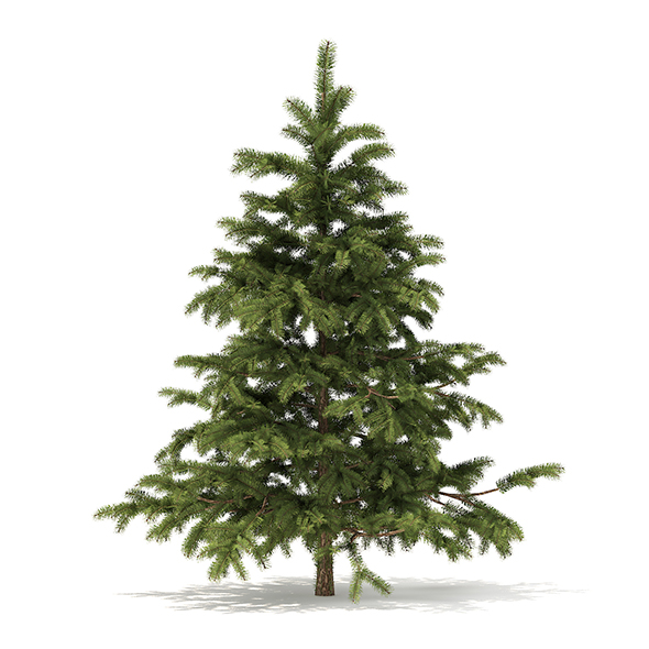 Pine Tree 3D Model 2.3m - 3DOcean Item for Sale