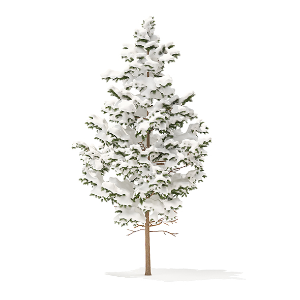 Pine Tree with Snow 3D Model 5.5m - 3DOcean Item for Sale
