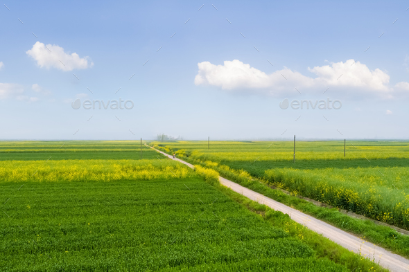 beautiful field in spring - Stock Photo - Images