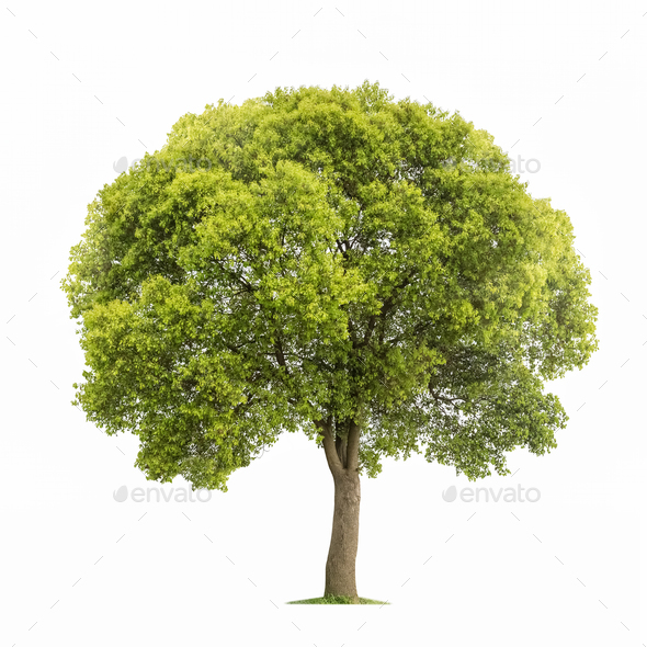 beautiful tree isolated - Stock Photo - Images