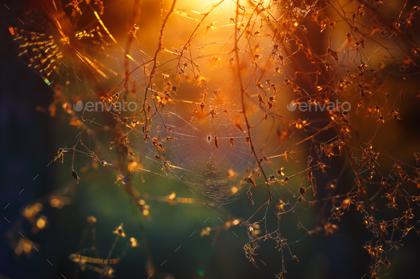 Spiderweb in the forest - Stock Photo - Images