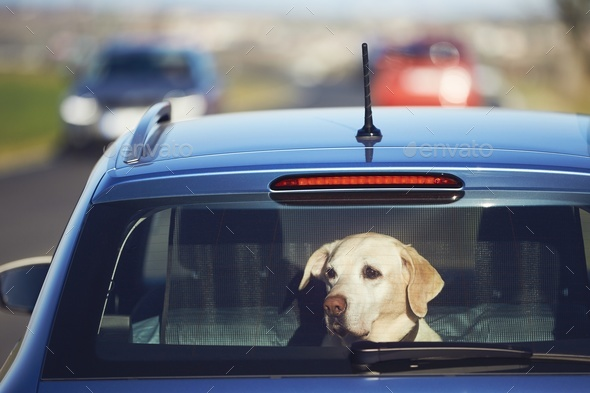 Travel with dog - Stock Photo - Images