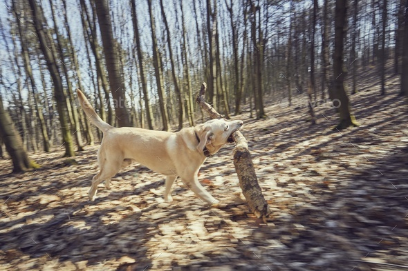 Dog with stick - Stock Photo - Images