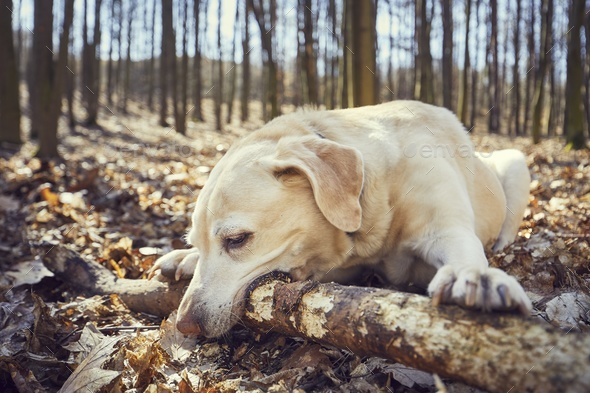 Playful dog in forest - Stock Photo - Images