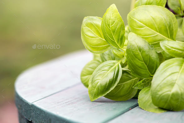 Fresh green basil leaves - Stock Photo - Images