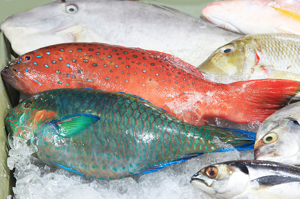 Fresh tropical fish in the ice - Stock Photo - Images