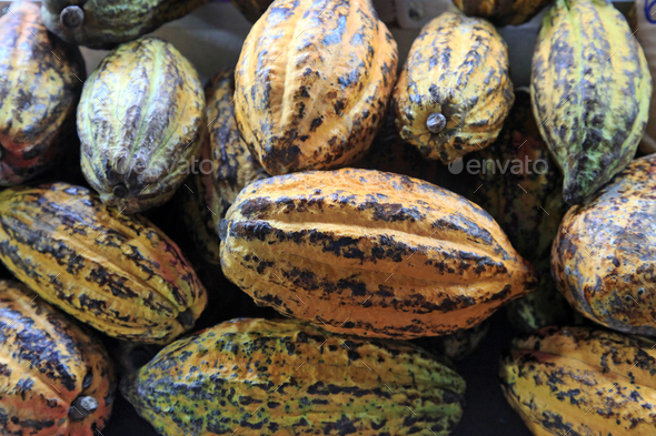 cocoa, ripe fruits - Stock Photo - Images