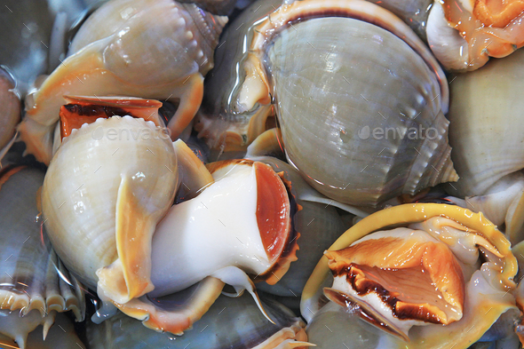 Molluscs Of The Gulf Of Thailand - Stock Photo - Images