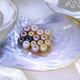 Multiple pearls in sea shell  - PhotoDune Item for Sale