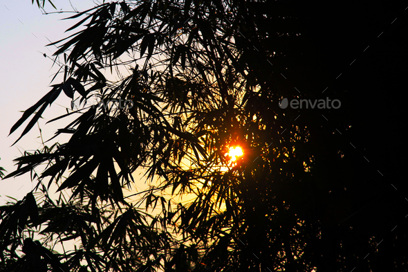 sun and bamboo - Stock Photo - Images