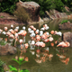 Pink and white flamingos - PhotoDune Item for Sale