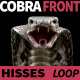 Cobra Front View Hisses - VideoHive Item for Sale