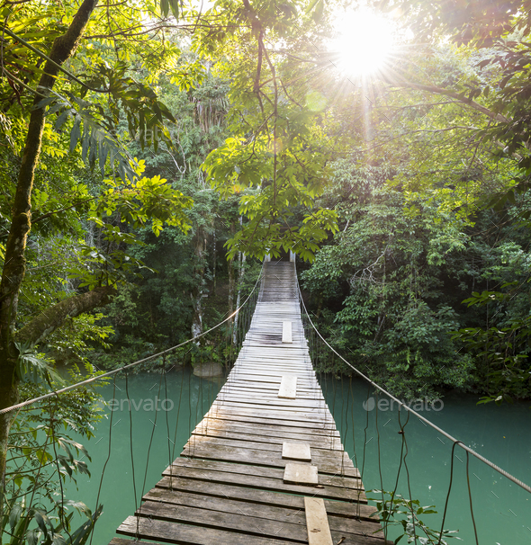Tranquil Forest Footbridge - Stock Photo - Images