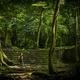 Adventure Travel In Jungle - PhotoDune Item for Sale