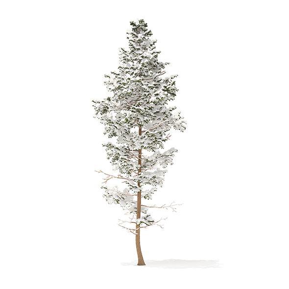 Pine Tree with Snow 3D Model 14m - 3DOcean Item for Sale